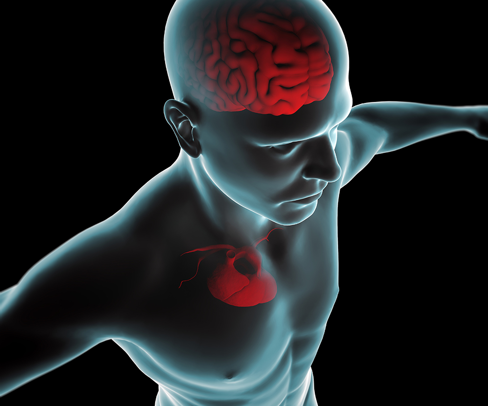 heart and brain blog